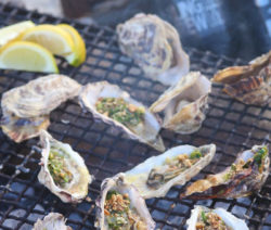 Fire Baked Dukkah Oysters with Herb Butter 4x6