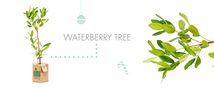 Waterberrytree