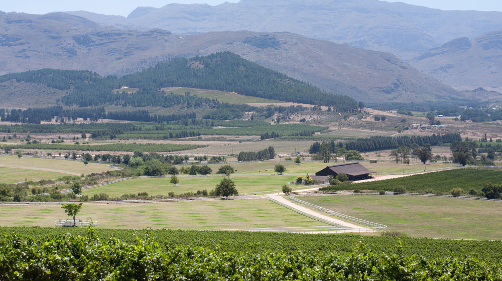 Fall in love with Franschhoek
