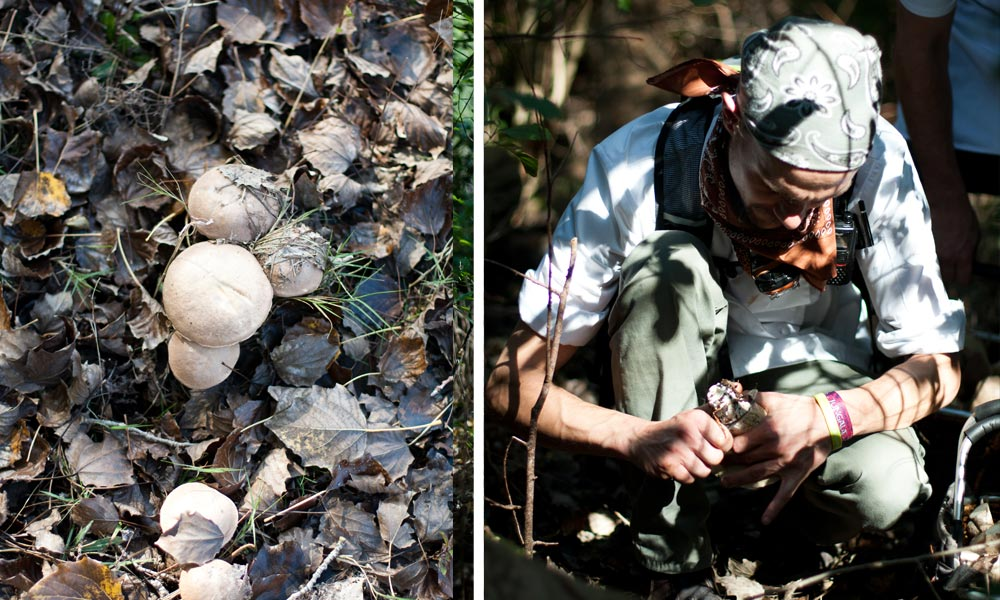 foraging for edible wild mushrooms