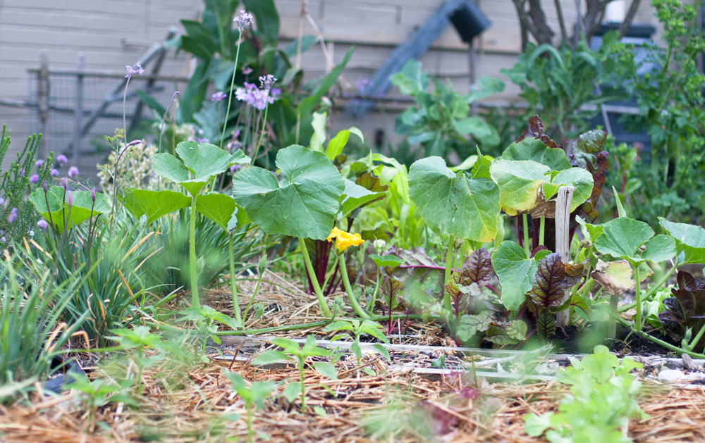 Justin Bonello's Vegetable Garden