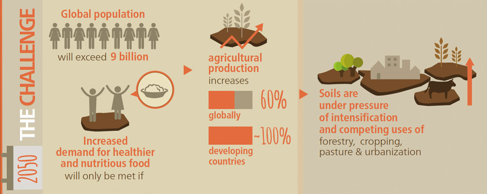 Year-of-Soil-Food-Production