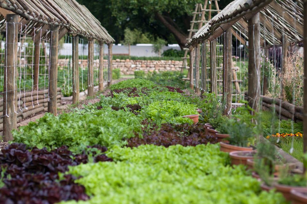 boschendal_werf_vegetable_garden