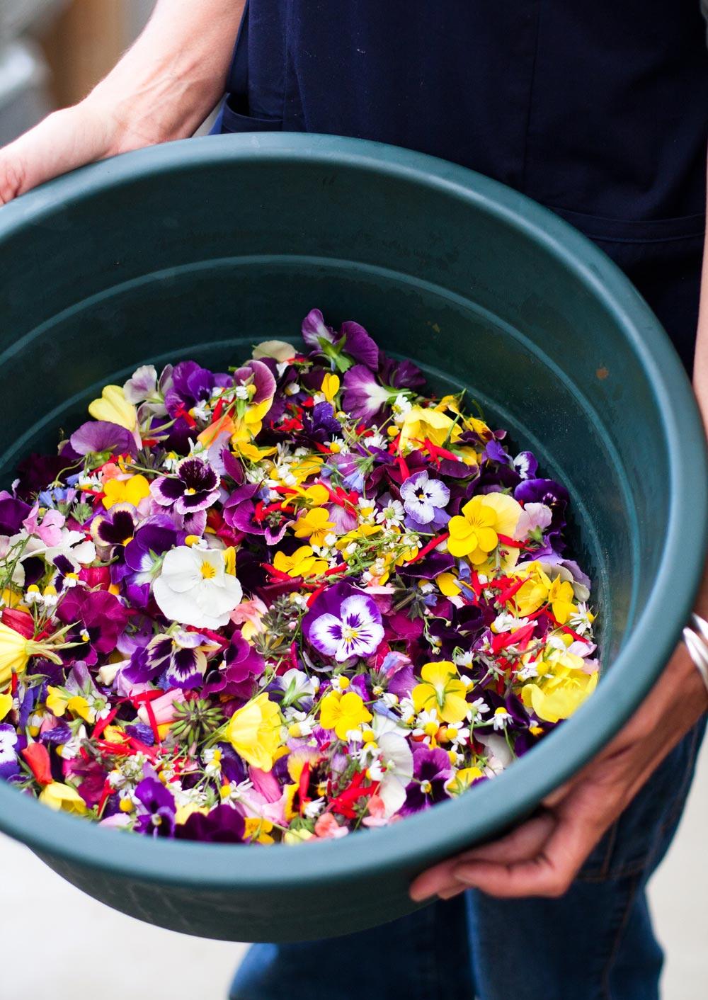 boschendal_werf_vegetable_garden_edible_flowers