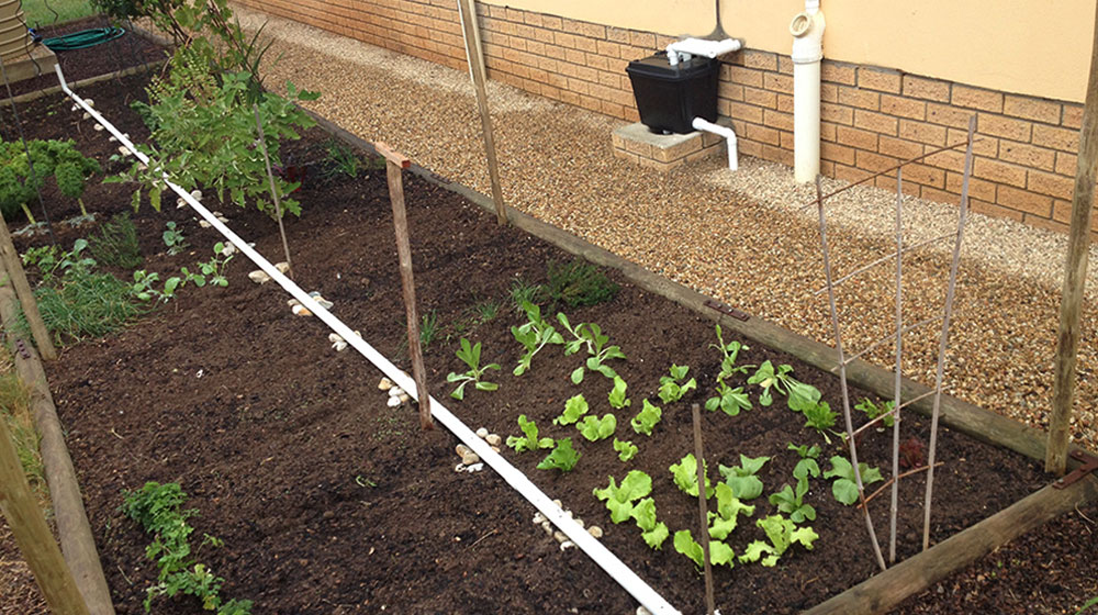 A Waterwise Garden Creating A Grey Water System Crush