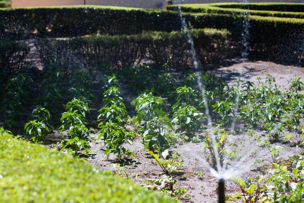 Vergelegen_vegetable_garden