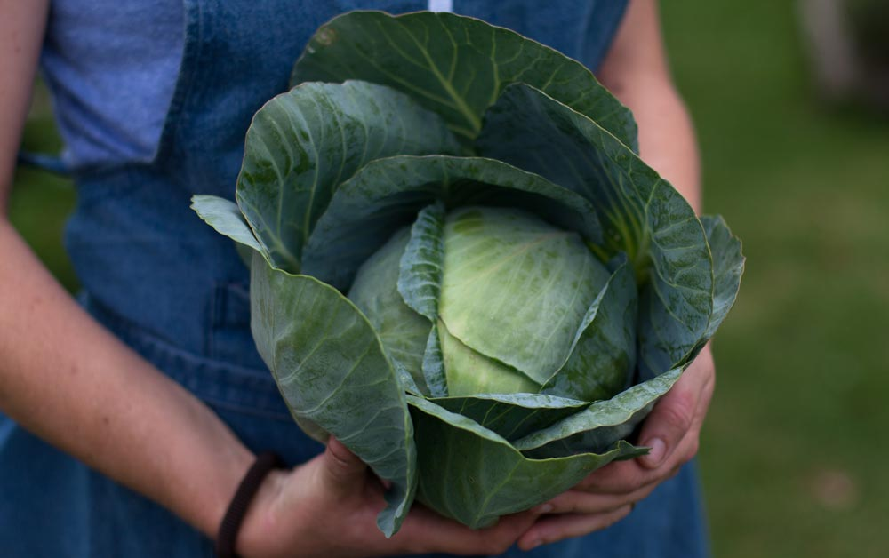 The_Table_cabbage