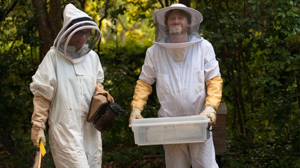 Urban Beekeeping