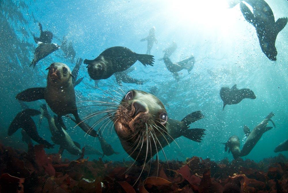 Seal-Snorkeling-Animal-Ocean