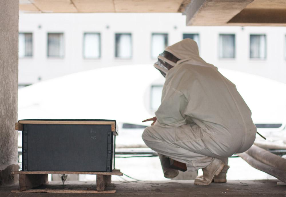Rooftop beekeeping Gardeners-Glory