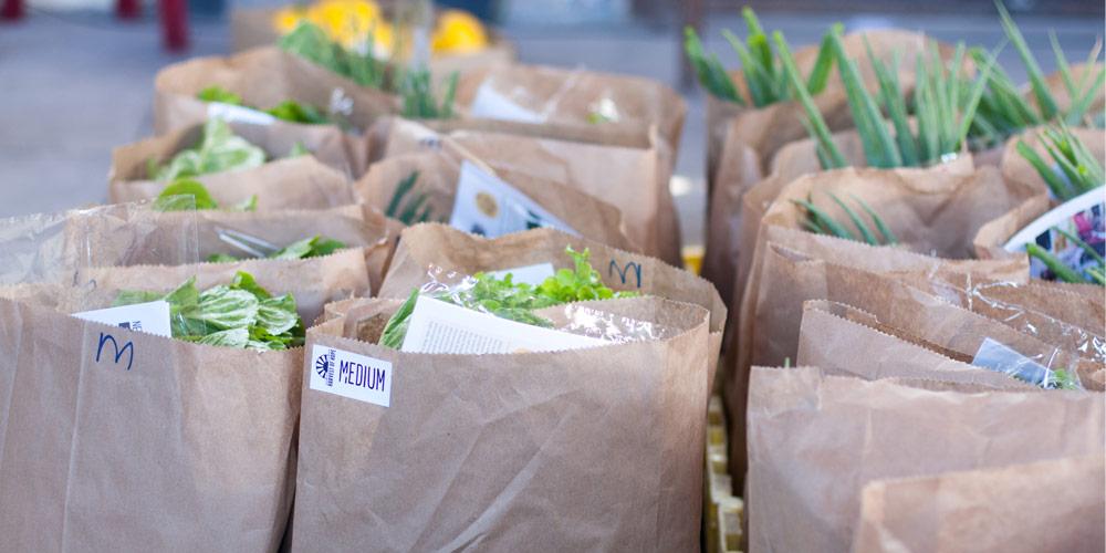 Organic-Veg-Boxes