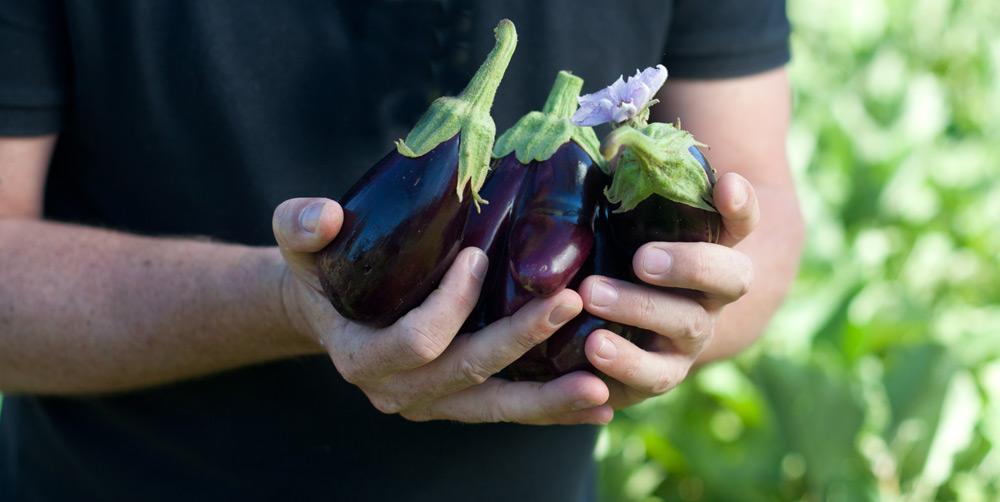 Chef Brad Ball_-aubergines