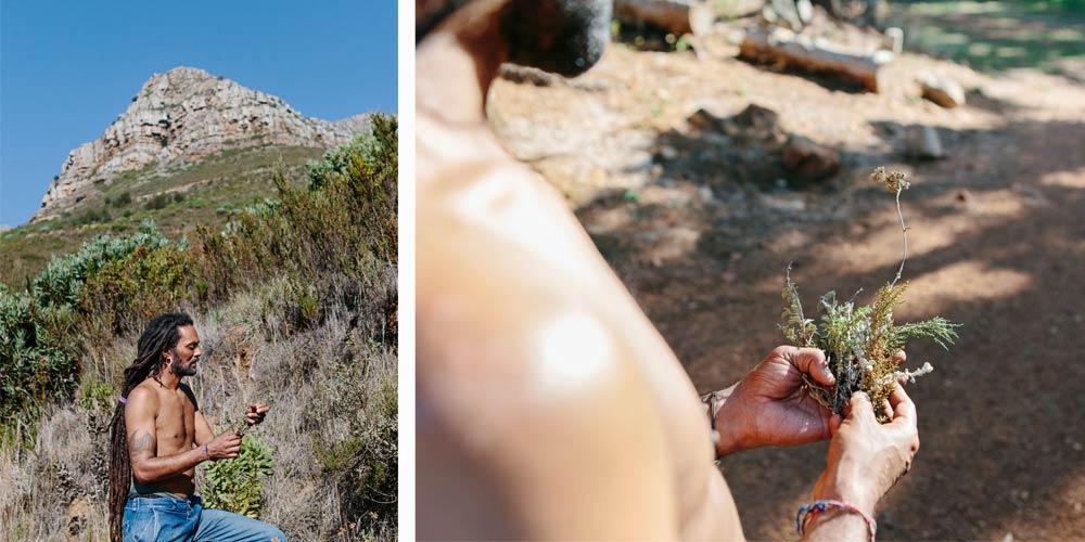 Cape Floral Kingdom Carlo-Randall