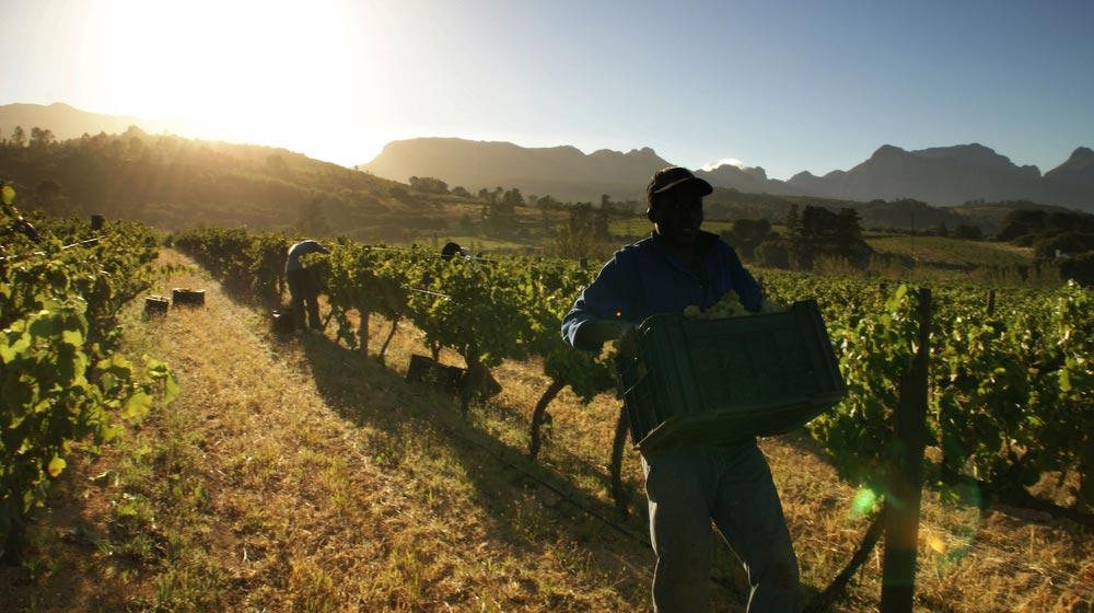 biocape-wines