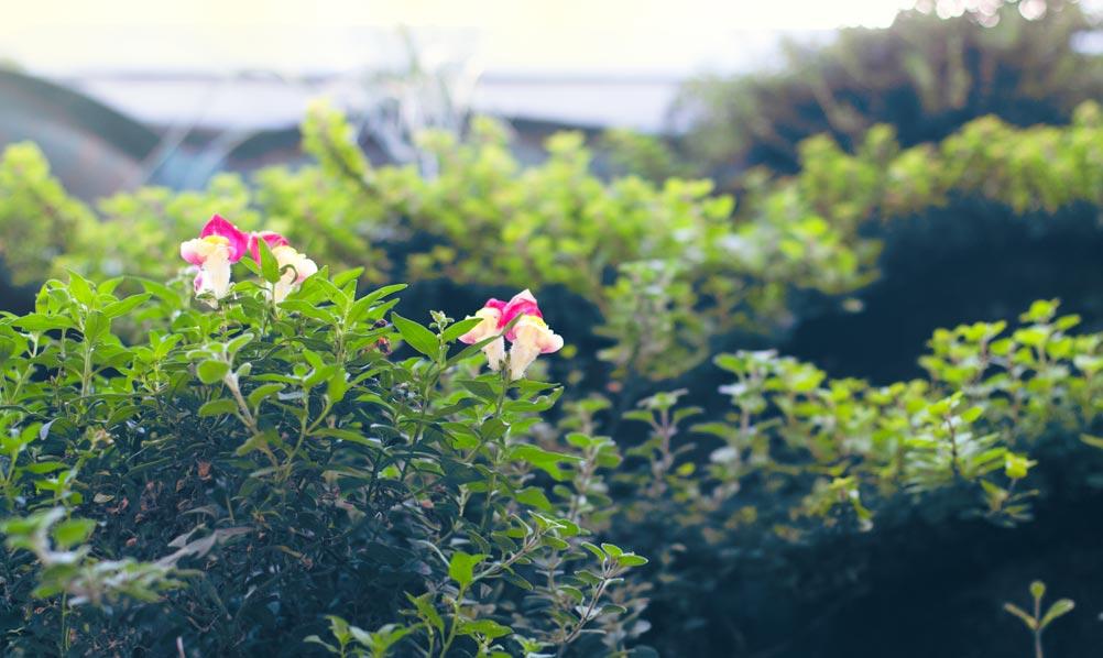 Westin Cape Town Rooftop Garden