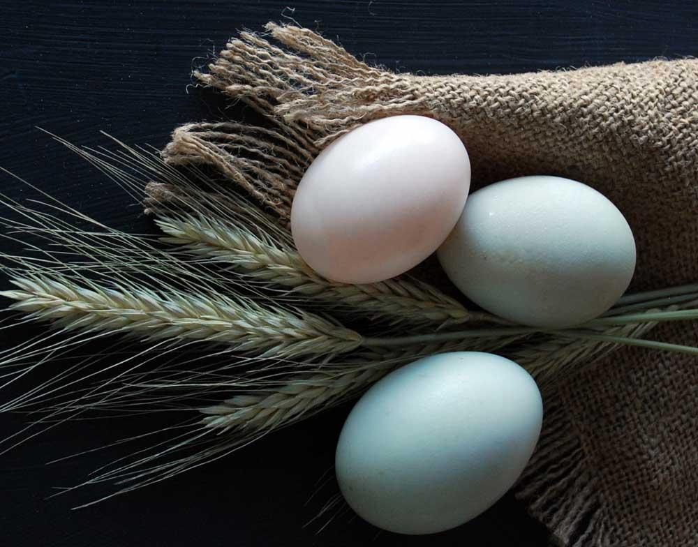 wild-organics-eggs