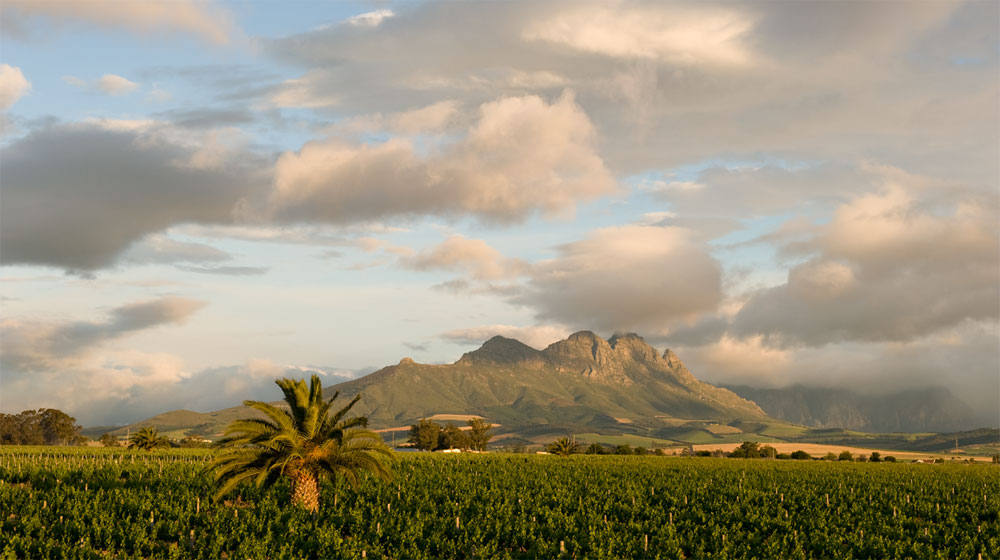 Villiera-vineyards-1