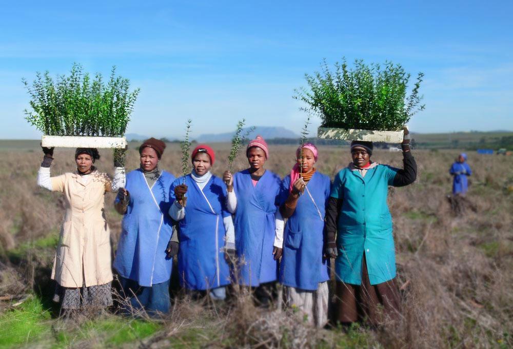 villiera-tree-planting_