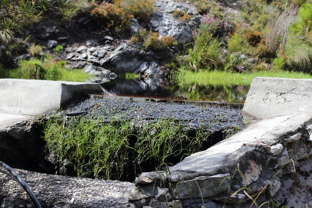 Bouchard-Finlayson Nature Walks