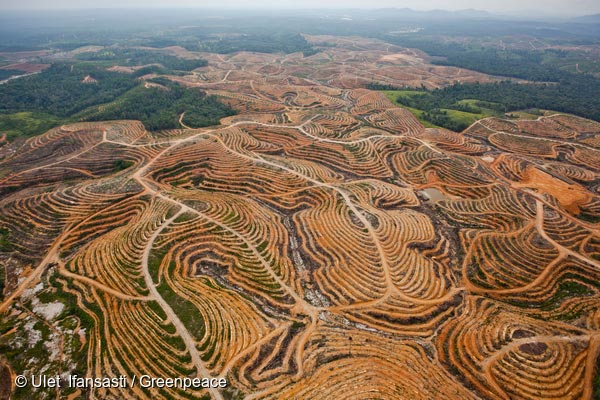 Image result for palm oil devastation