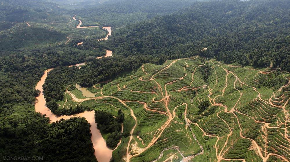 oil-Palm-Production Monga Bay