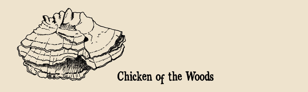 chicken of the woods a guide to edible mushrooms
