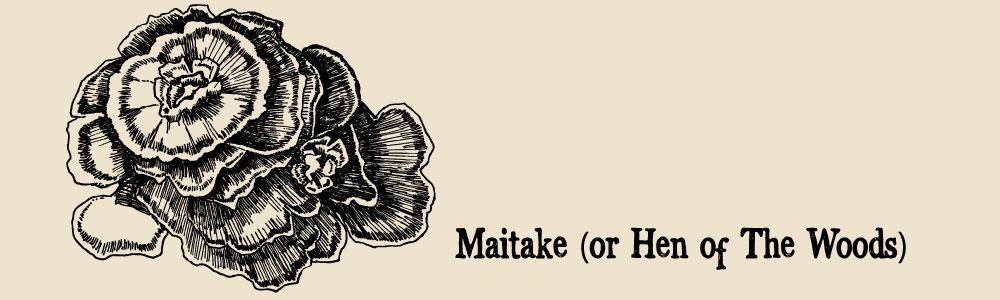 Maitake a guide to edible mushrooms