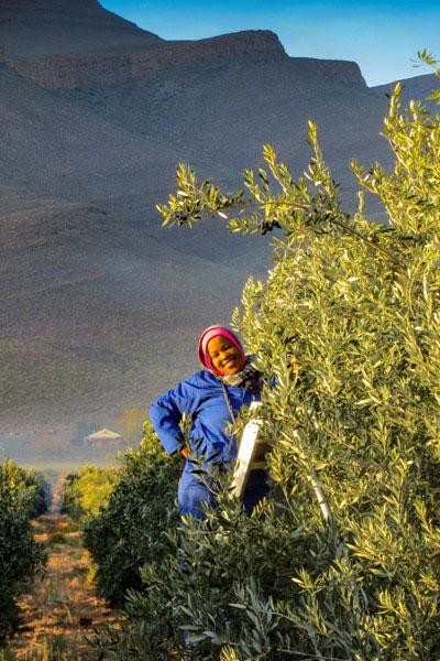 ABSA TOP 10 Olive Oils Delicate Category Mount Cedar