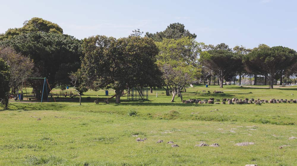 Keurboom-Park-Beautiful-Picnic-Spots-in-Cape-Town-1x5