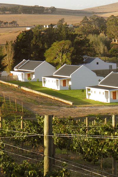 ABSA TOP 10 Olive Oils Medium Category Wilderkrans Estate