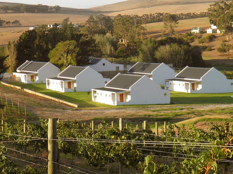 Absa Olive Oil Awards Wilderkrans Estate