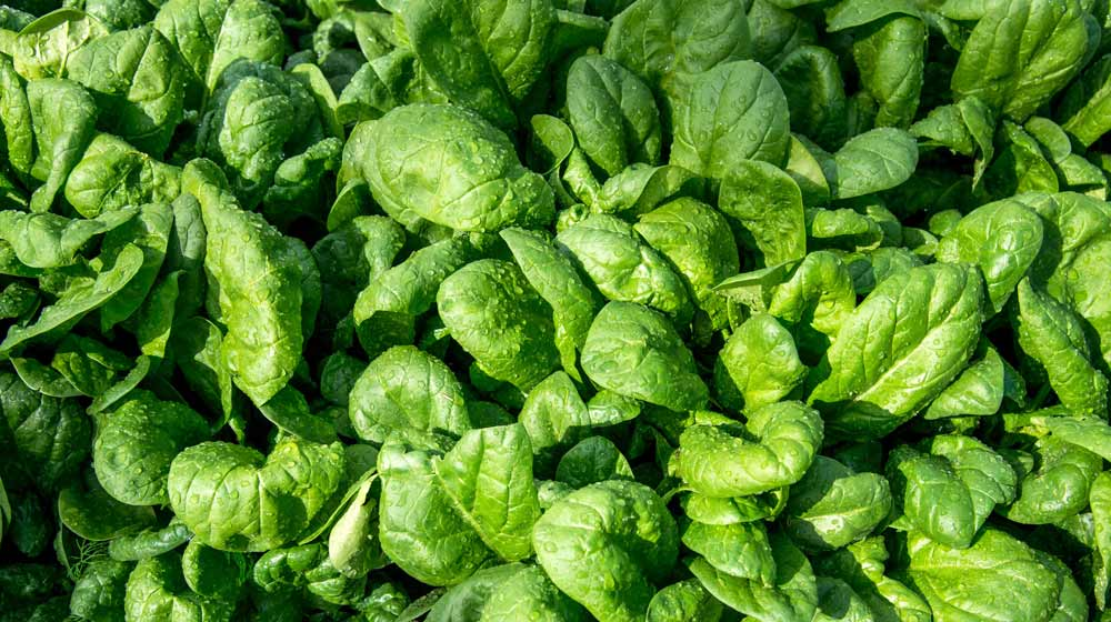 Health-Benefits-of-Spinach-1x5