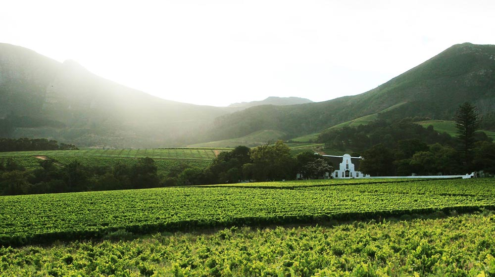constantia wine farms