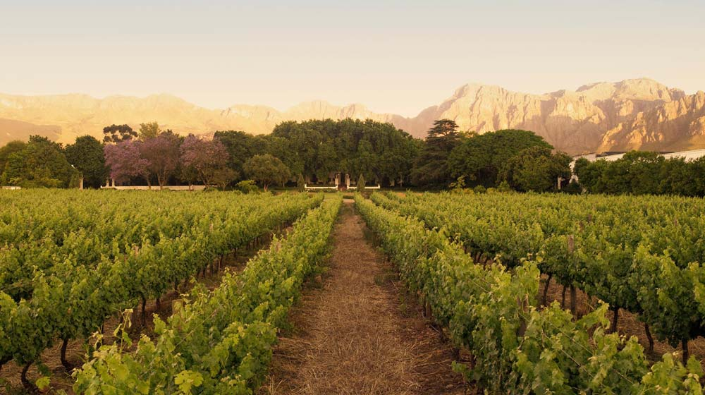 wine tasting in paarl nederburg