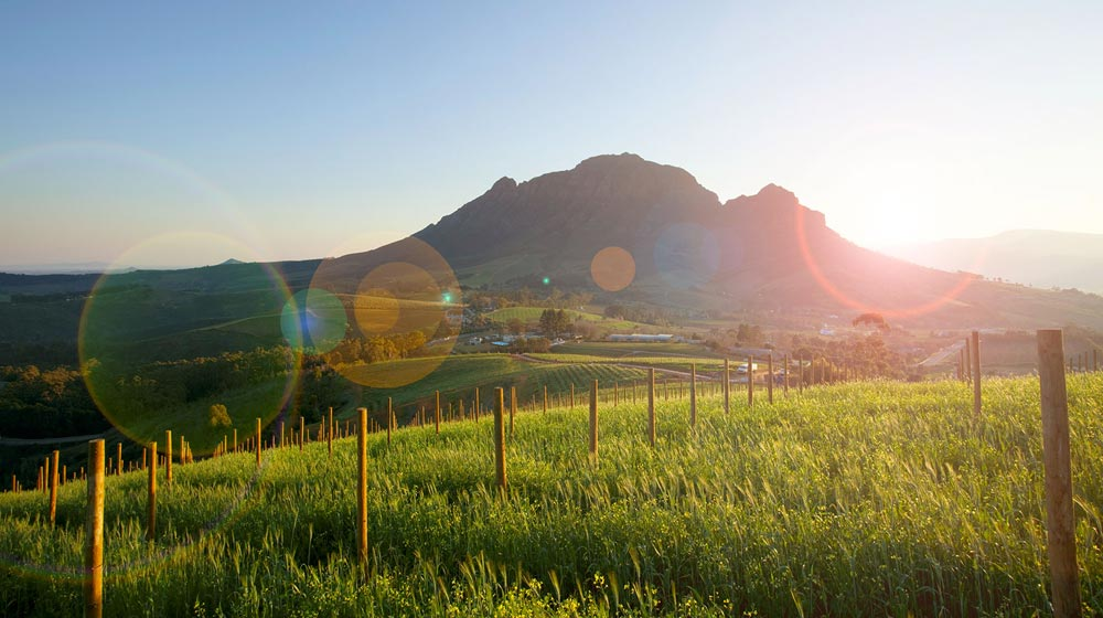 Stellenbosch Wine Farms
