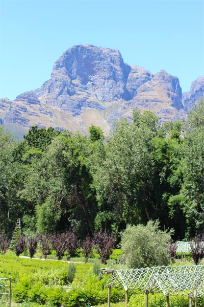 Long Sunday Lunch at Boschendal