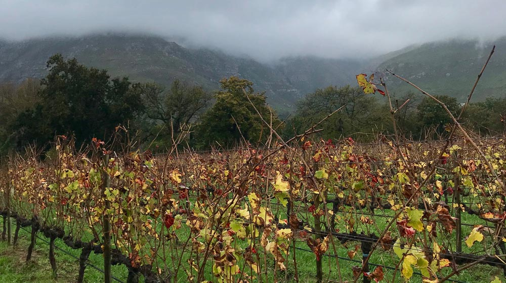 Upper blaauwklippen vintners