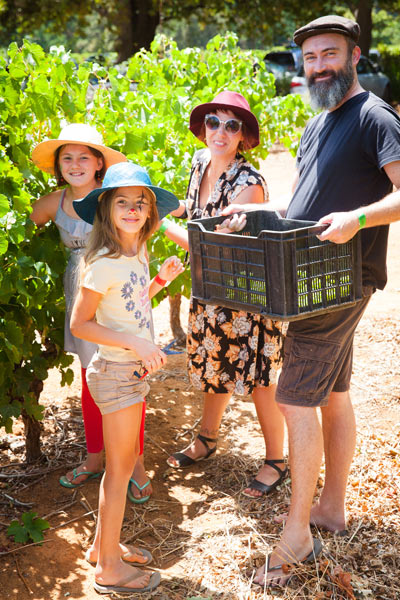 family fun picking grapes at Delheim Harvest Festival