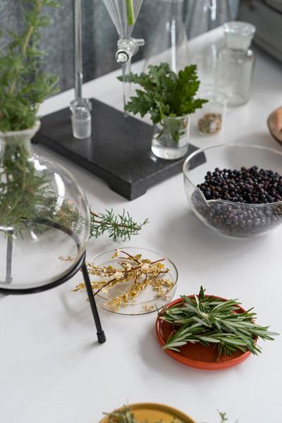 Hope's Immersive Tasting Room Gin botanicals table