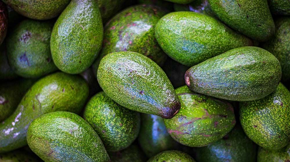 avo varieties