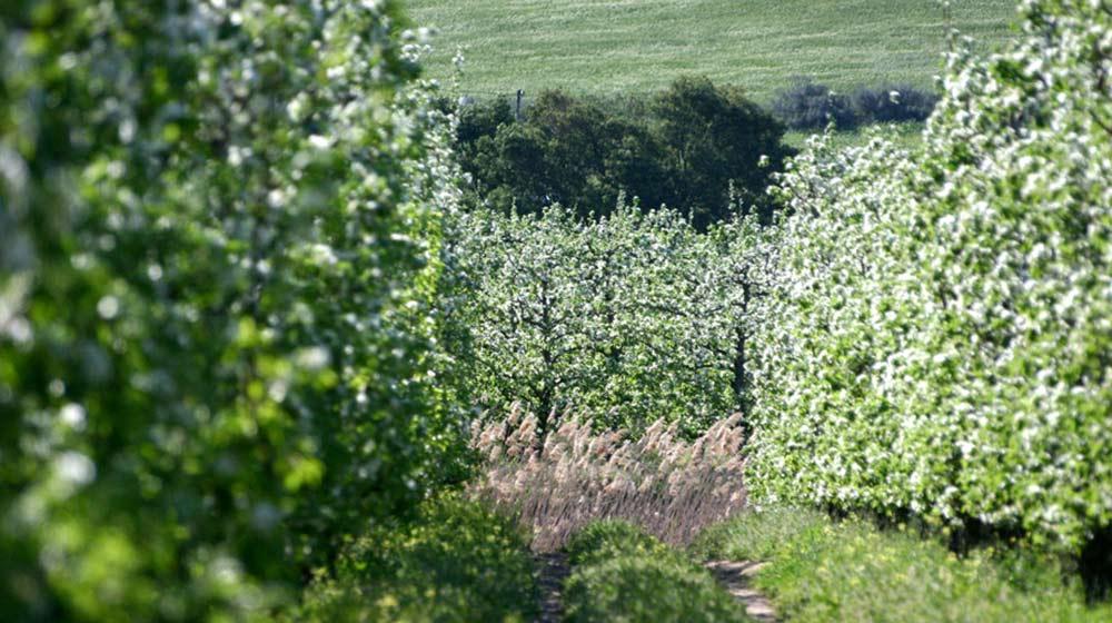 pg fruit olive estate